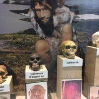 """Lezing """"Archeogenetica: wat ons DNA vertelt over onze voorouders"""""""